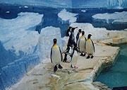 屋内ペンギン