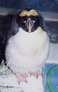 ペンギン内