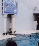 イルカショー中のペンギン