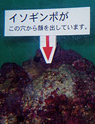 19990301_000018_riemagu.jpg