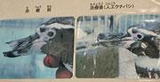 20030926_000003_riemagu.jpg