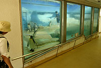 20040718_101416_riemagu_eos.jpg