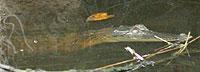 20060129_183354_riemagu.jpg