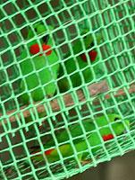 20060130_152247_riemagu.jpg