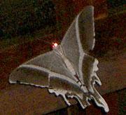 20060130_221946_riemagu.jpg