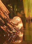 20070301_181141_riemagu.jpg