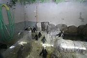 20080130_031910_riemagu.jpg