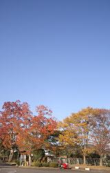 DUCAと紅葉と秋晴れ