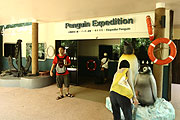 Penguin Expedition