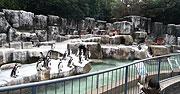 ペンギン展示左から