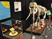 化石の特別展