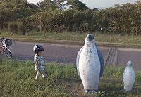 公園のペンギン