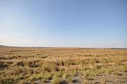 見渡すかぎりの草原