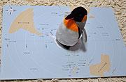 南極マップ