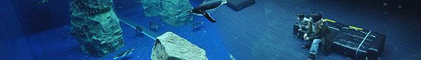 しまね海洋館 アクアス