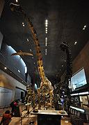le Museum national d' histoire naturelle風