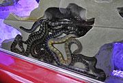 ウミヘビだまり