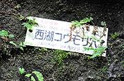 コウモリ穴