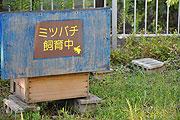 ミツバチ飼育中
