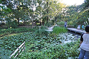 多自然型庭園