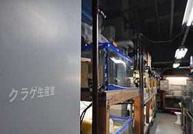 クラゲ生産室