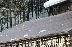屋根にサル