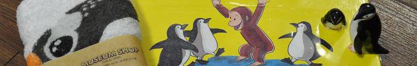 東海大から連れ帰ったペンギンたち