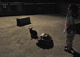 夜のウサギとカメ