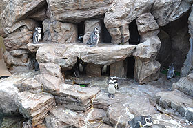 ペンギン巣穴