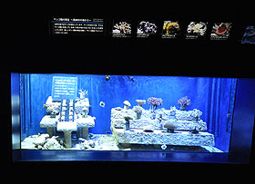 サンゴ返還プロジェクト