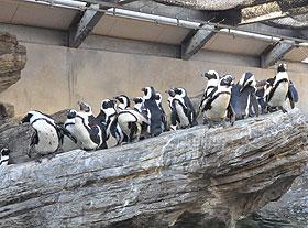 ペンギン集合