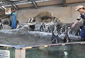 ペンギン給餌解説