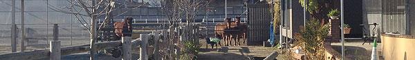 愛知木曽馬牧場