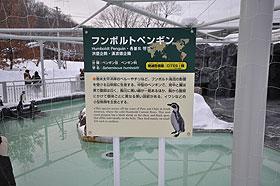 ペンギン解説板