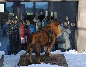 ライオンサービス