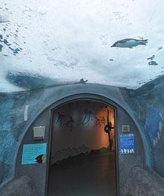 氷と通路とペンギン