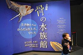 骨の水族館