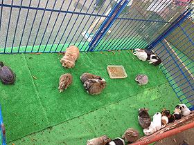 ウサギ・モルモット