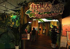 カエルズコレクション2013
